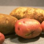 6 alimentos que fortalecen tu sistema digestivo e inmunològico