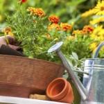 Riegue su jardín con vinagre de manzana ¿La razón? ¡Increíble!