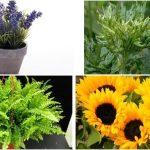 Plantas que crean una energía positiva en su hogar