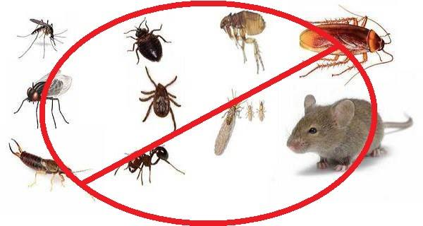 Elimine insectos y roedores con estos 8 repelentes caseros