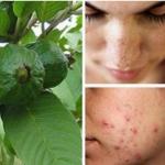 Hojas que eliminan las arrugas, el acné y las manchas en la piel