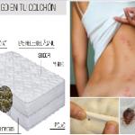 Insectos que habitan en su cama; dañan su espalda y pulmones mientras duerme. Aprenda a eliminarlos