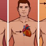 ESTO PUEDE SALVARTE LA VIDA! Conoce las diferencias entre un infarto, un paro cardíaco, un derrame cerebral y un simple dolor de cabeza