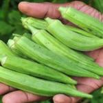 Esta planta te ayudará a limpiar los riñones de toxinas, a tratar la diabetes, el colesterol y mucho más