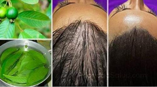 Sorprendentes hojas que hacen crecer el cabello como loco
