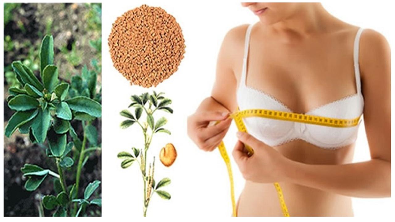 Aumenta el tamaño de tus pechos con ayuda de estos ingredientes naturales