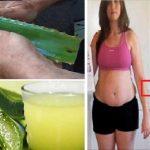 Elimina la grasa abdominal, las toxinas de tu cuerpo y mejora tu salud con la ayuda del aloe vera