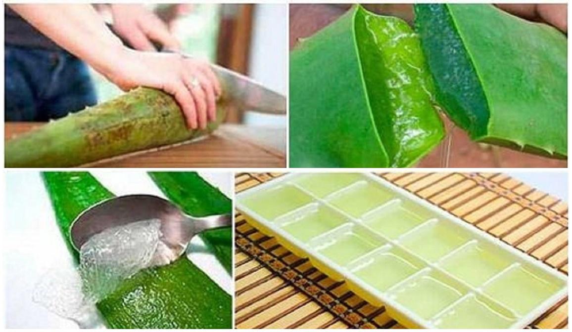 Congela el Aloe Vera y guárdalo en cubitos de hielo ¡Lo que pasará con tu cuerpo minutos después te sorprenderá!
