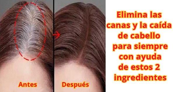 Elimina las canas y la caída de cabello para siempre con ayuda de estos 2 ingredientes