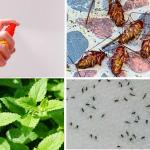 Las moscas, mosquitos, cucarachas y hormigas desaparecerán en 1 hora con esto
