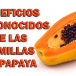 Después de que sepas esto no volverás a tirar las semillas de Papaya