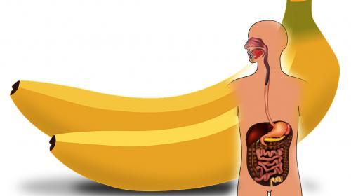 Si comes 2 plátanos al día esto es lo que sucederá en tu cuerpo