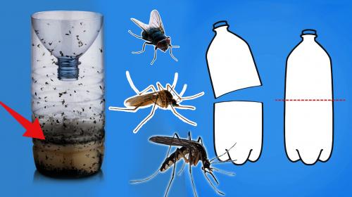 7 maneras de eliminar a los mosquitos