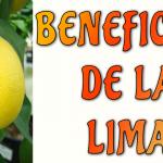 La lima es una fruta fabulosa, y al saber las razones la amarás!