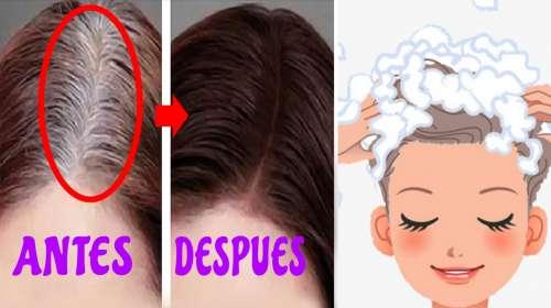 Nunca más volverás a ver una CANA en tu cabello ya que esto lo eliminará!