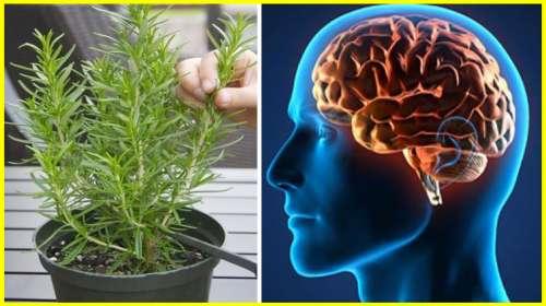 Milagrosa Planta que Recupera la Memoria en 100%, Protege Contra el Alzheimer, Depresión y más