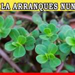 🌿No Arranques Esta Planta Si Crece En Tu Jardín o Patio Mira El Motivo